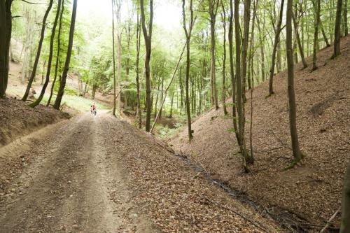 Fuhrweg der Bergleute
