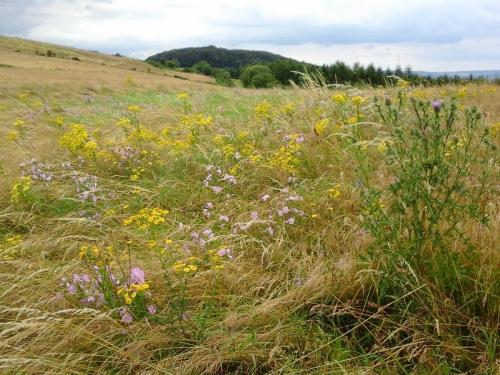 Sommerwiese auf Linder Höhe